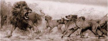 dyreinternater for hunde